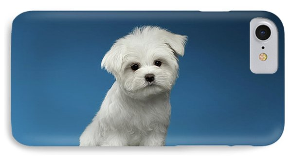 Cute Pure White Maltese Puppy Standing And Curiously Looking In Camera Isolated On Blue Background IPhone 7 Case by Sergey Taran