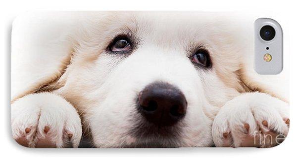 Cute White Puppy Dog Lying And Looking Up. Polish Tatra Sheepdog IPhone Case