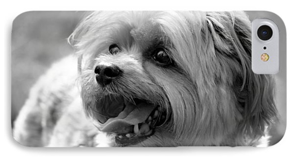 Cute Yorkie - Yorkshire Terrier Dog IPhone Case by Tracie Kaska