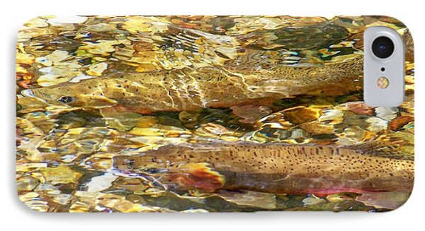Cutthroat Trout In Clear Mountain Stream Phone Case by Greg Hammond