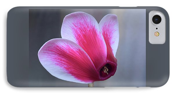 IPhone Case featuring the photograph Cyclamen Portrait. by Terence Davis