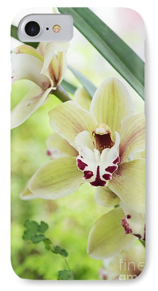 Cymbidium Orchid IPhone Case by Tim Gainey