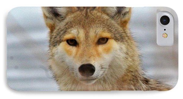 Cyote IPhone Case