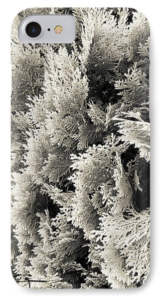 Cypress Branches No.2 IPhone Case