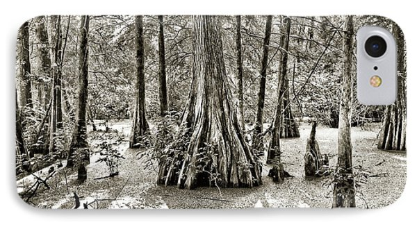 Cypress Evening Phone Case by Scott Pellegrin