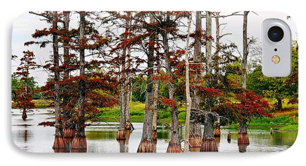 Cypress In Autumn IPhone Case by KayeCee Spain