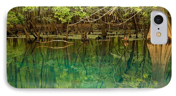 Cypress In Manatee IPhone Case by Adam Jewell