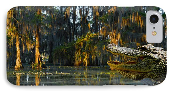 Cypress Island Gator IPhone Case by Kimo Fernandez