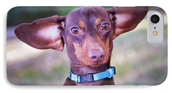 Dachshund Ears Up IPhone Case by Stephanie Hayes