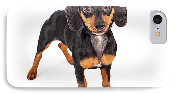 Dachshund Puppy Dog Standing Lookng Forward IPhone Case by Susan Schmitz