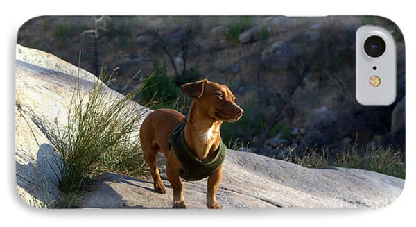 Dachshund's Delight IPhone Case