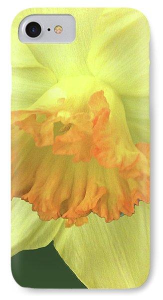 Daffodil Down Phone Case by Debra     Vatalaro