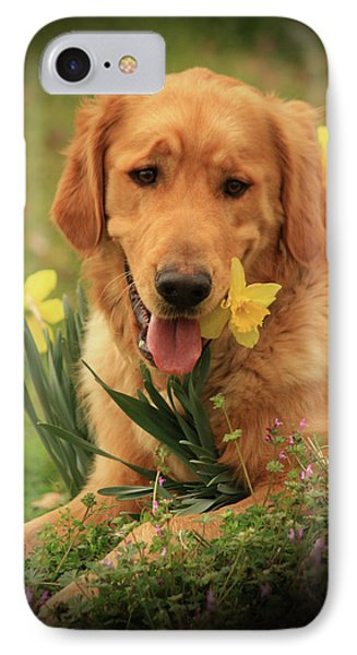 IPhone Case featuring the photograph Daffodil Dreams by Kim Henderson