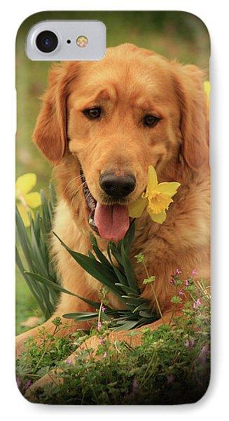 Daffodil Dreams IPhone Case by Kim Henderson