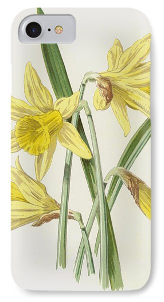 Daffodil  IPhone Case by Frederick Edward Hulme