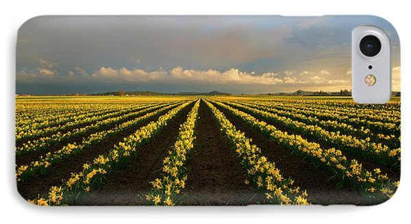IPhone Case featuring the photograph Daffodil Storm by Mike Dawson