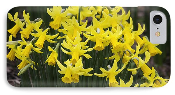 Daffodil Yellow IPhone Case by Shirley Mitchell