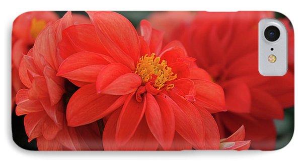 Dahlia Bloomer IPhone Case by Ronda Ryan