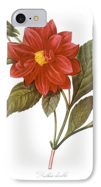 Dahlia (dahlia Pinnata) IPhone Case by Granger