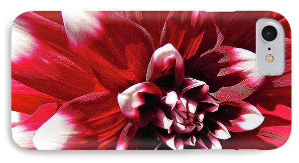 Dahlia Defined IPhone Case by Randy Rosenberger