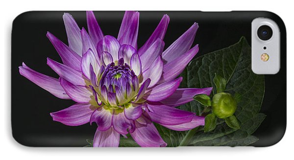 IPhone Case featuring the photograph Dahlia Glow by Roman Kurywczak