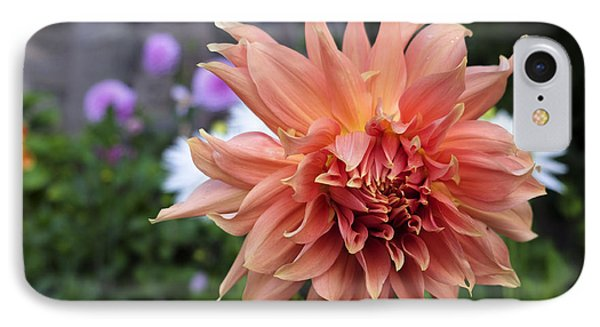 Dahlia - Inverness IPhone Case by Amy Fearn