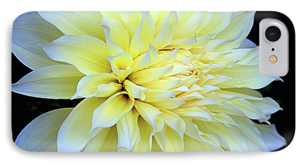 IPhone Case featuring the photograph Dahlia Kelvin Floodlight by Julie Palencia