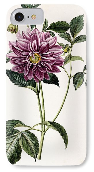 Dahlia Rosea IPhone Case by Honore Blanc