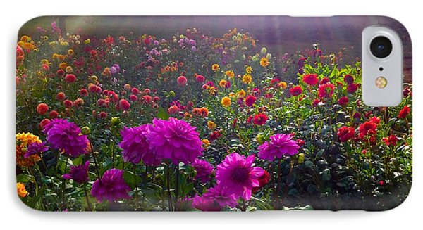 Dahlias Kissed By Sun-rays  IPhone Case