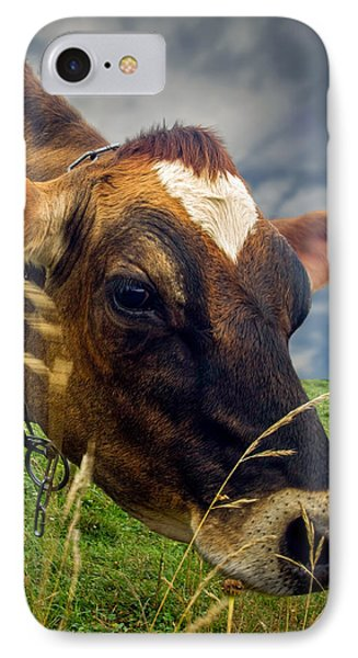 Dairy Cow Eating Grass Phone Case by Bob Orsillo