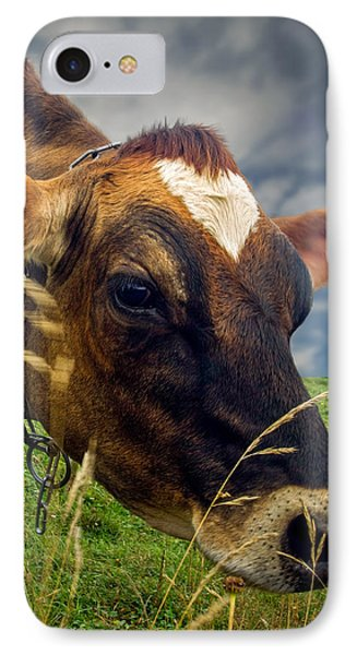 Dairy Cow Eating Grass IPhone Case