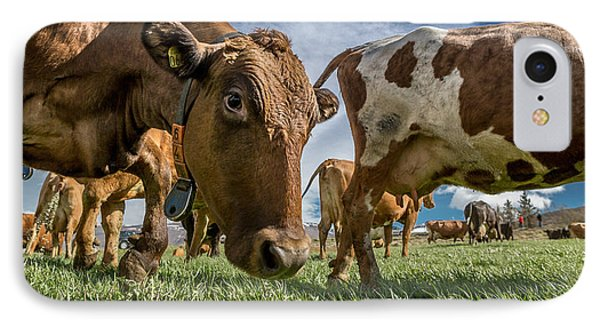 Dairy Cows With Electronic Collars IPhone Case