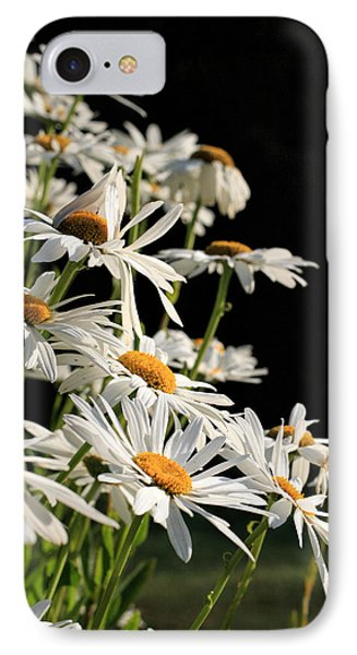 Daisies IPhone Case by Dorothy Cunningham
