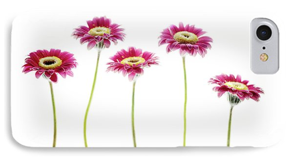 IPhone Case featuring the photograph Daisies In A Row by Rebecca Cozart