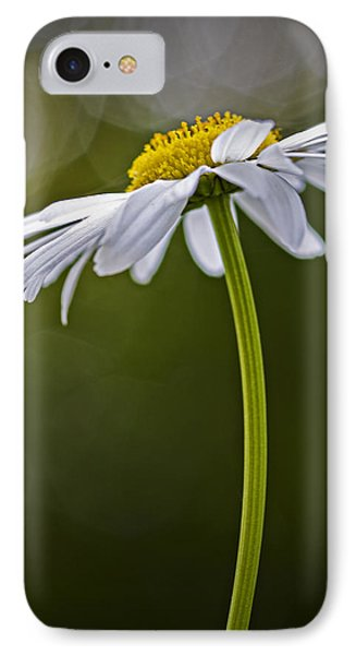Daisy IPhone Case by Bob Decker
