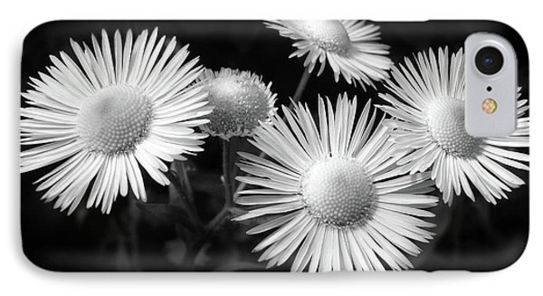 IPhone Case featuring the photograph Daisy Flowers Black And White by Christina Rollo