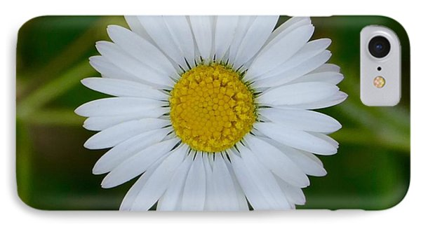 Daisy  IPhone Case by James Johnson