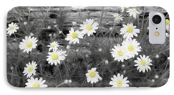 IPhone Case featuring the photograph Daisy Patch by Benanne Stiens