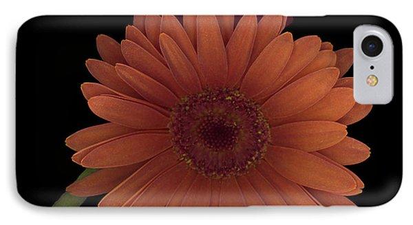 Daisy Tilt IPhone Case by Heather Kirk
