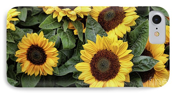 Daisy Yellow  IPhone Case by Chuck Kuhn