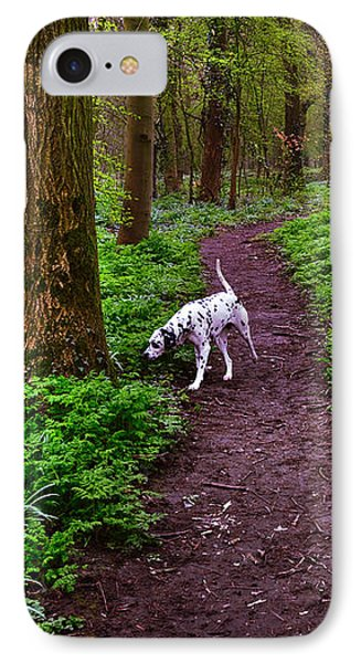 Dalmatian In The Spring Woods IPhone Case by Jenny Rainbow