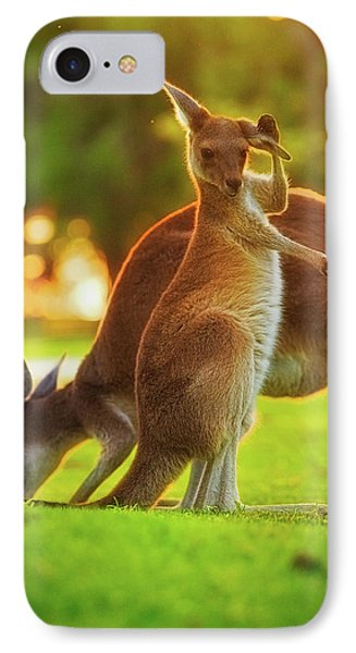 Damn Flies, Yanchep National Park IPhone Case by Dave Catley