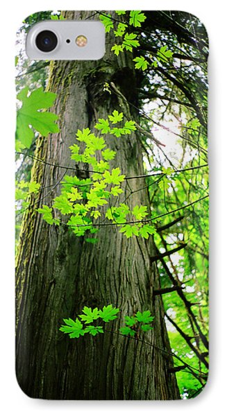 IPhone Case featuring the photograph Dancing Leaves by Kathy Bassett