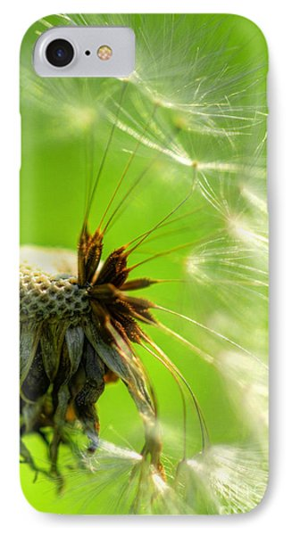 IPhone Case featuring the photograph Dandelion by Alana Ranney