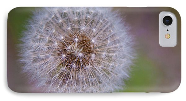 Dandelion IPhone Case by April Reppucci