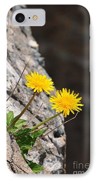 Dandelion Phone Case by Catherine Reusch Daley
