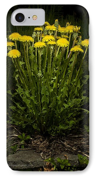 Dandelion Clump IPhone Case
