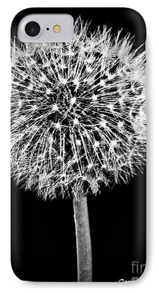 Dandelion Descending IPhone Case by Carol F Austin