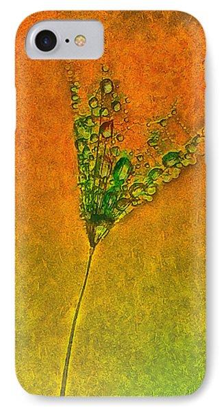 Dandelion Flower - Pa IPhone Case by Leonardo Digenio