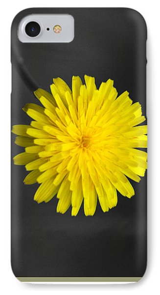 Dandelion Phone Case by Holly Kempe
